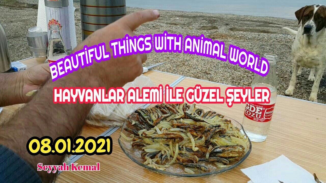 Hayvanlar Alemi İle Güzel Şeyler | Beautiful things with animal world | Karavan | Caravan Trips