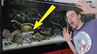 5ft Aquarium Update With Crayfish (Alan)