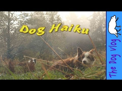 Dog Haiku - Anticipation, by Border Collies