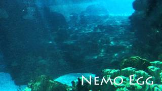 Finding Nemo Theme: Nemo Egg - Thomas Newman // Michael Linn Cover