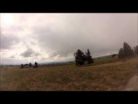 saturday field trials