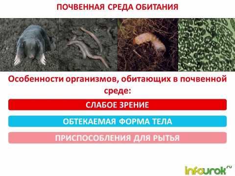 Влияние окружающей среды на здоровье человека Экология и