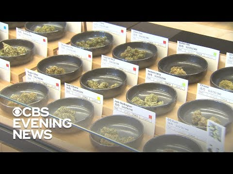 Marijuana On The Ballot: Which States Could Legalize Pot?