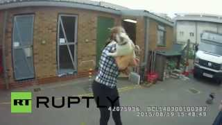 Uk: Stolen Pug Reunited With Owner After Being Pinched In Burglary