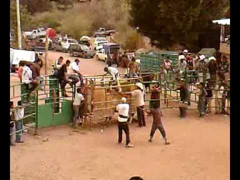 Jaripeo-Ejutla de Crespo,Oaxaca Travel Video