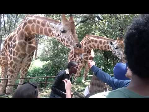Giraffe Centre 2 - Nairobi City Tours
