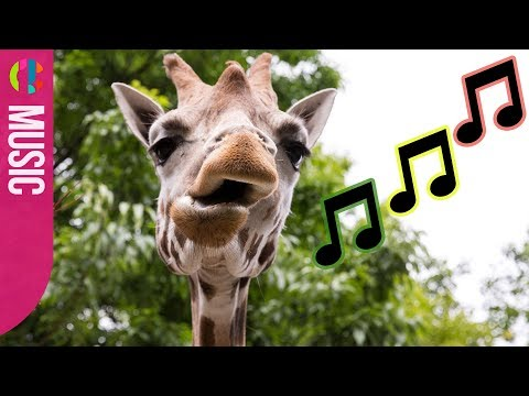 Funny Animals Alert! | The Zoo Theme Tune