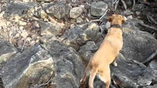 In Loving Memory Of Kayleigh, My Labrador Retriever.wmv