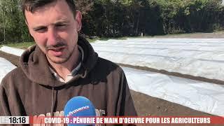 Covid-19 : pénurie de main d'oeuvre pour les agriculteurs
