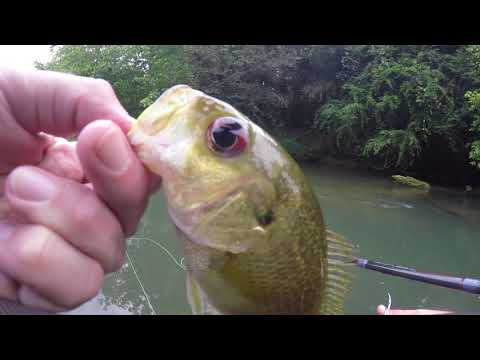 Fly Fishing Cypress Creek 8 27 17