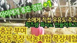 [남양 옳은맘3기 서포터즈 활동] 성동목장 목장체험 치…