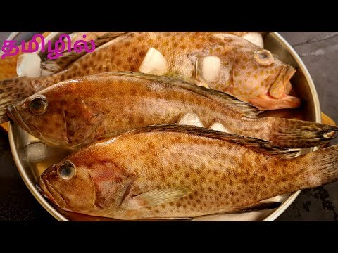 Lemon Butter Grouper Fish Baked In தமிழ் -  Fishing Cutting Cleaning & Cooking