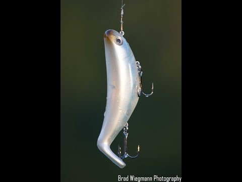 New StutterStep Topwater Lure By Rat-L-Trap Lures Featuring Wesley Higgins