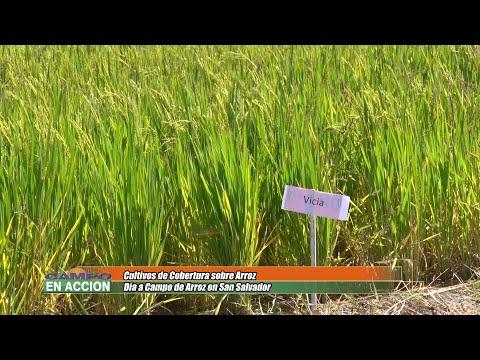 Hector Rodriguez - EEA INTA C del Uruguay - Ensayo demostrativo de rotaciones y cultivos de cobertura en Arroz