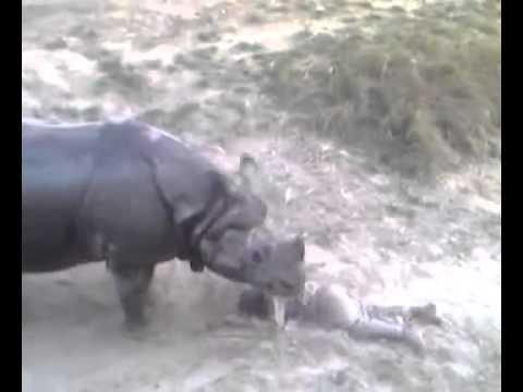 rhino attack in bahawalpur pakistan