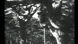 1939 Die schöne Wassilissa [ Василиса Прекрасная ]  (Alexander Rou @Gorky Film Studio)