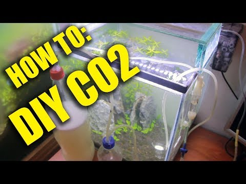 DIY CO2 for Planted Tanks