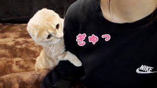 抱っこを求める短足猫が可愛すぎた