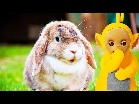 Teletubbies | Animals | Full Episode Compilation | Cartoons for Children