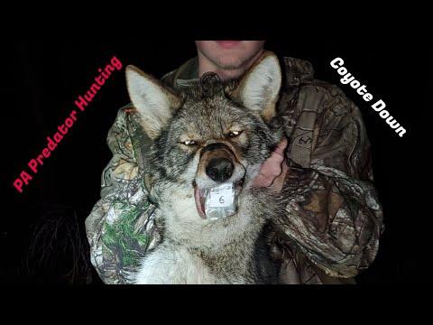 2019 PA Calling Championship (PA Predator Hunting)  PA Coyote Hunting