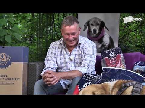 Gutes Gesundes Hundefutter Ernährung 2020 & Dinner For Dogs Erfahrungen (Beste Hundeernährung Test)