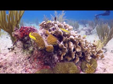 Scuba Diving - Mexico / Playa del Carmen / Jardines Reef! Go AA-Team! :^:^:^
