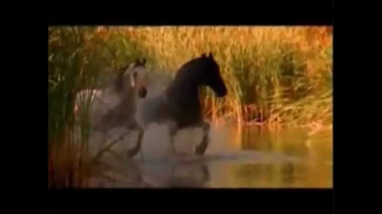 play wild horses song