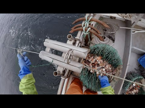 Halibut Fishing - Give 'em A Smorgasbord!