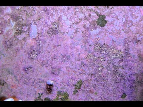 How to | Grow Coralline Algae 4K