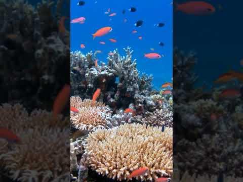 [samsung Theme- Video Wallpaper] Cute Fish