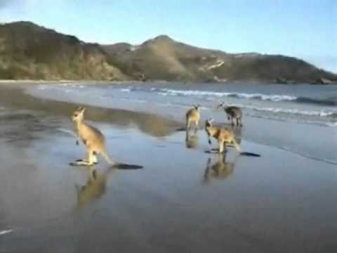 Western Australian wildlife interactions