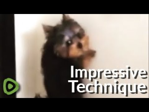 Crazy puppy goes to the bathroom while standing up