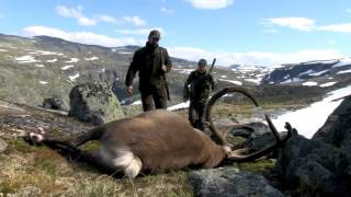Hunt &amp Cook: Rudolf the Reindeer