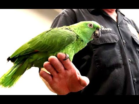 Bird Sounds Exactly Like Crying Baby - YouTube