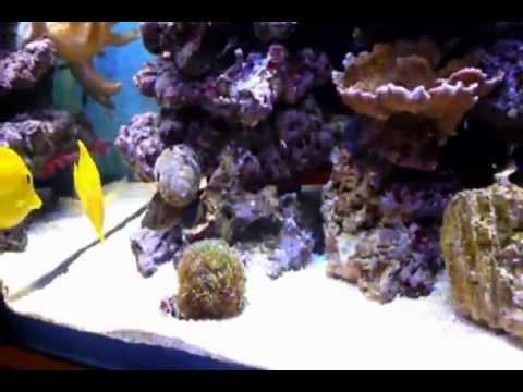 Mon aquarium marin doovi for Aquarium recifal nano