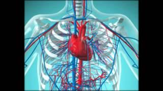 болезни сердца на нервной почве названия