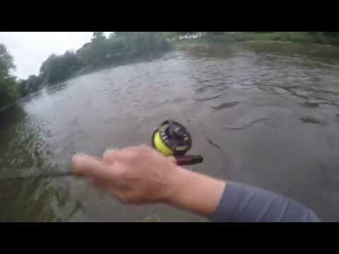 Trophy Smallmouth on the Fly! Fox River Trip