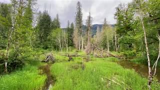 Recording Bird Sounds at a Pond on the Beaver Lake Trail, Darrington, WA