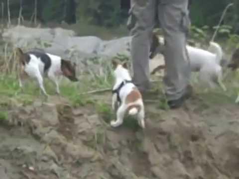 Dog Walk Trails 'Spine Line Trail' @ White Horse Golf Coarse Kingston WA
