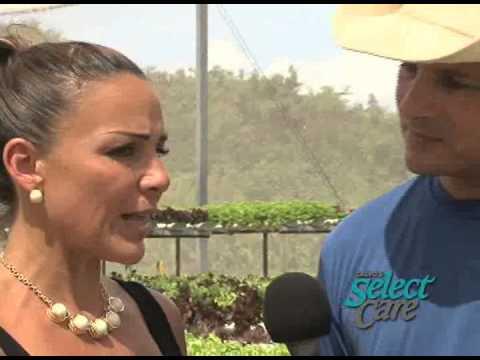 Calvo's Insurance - Daily Renewal: Grow Guam