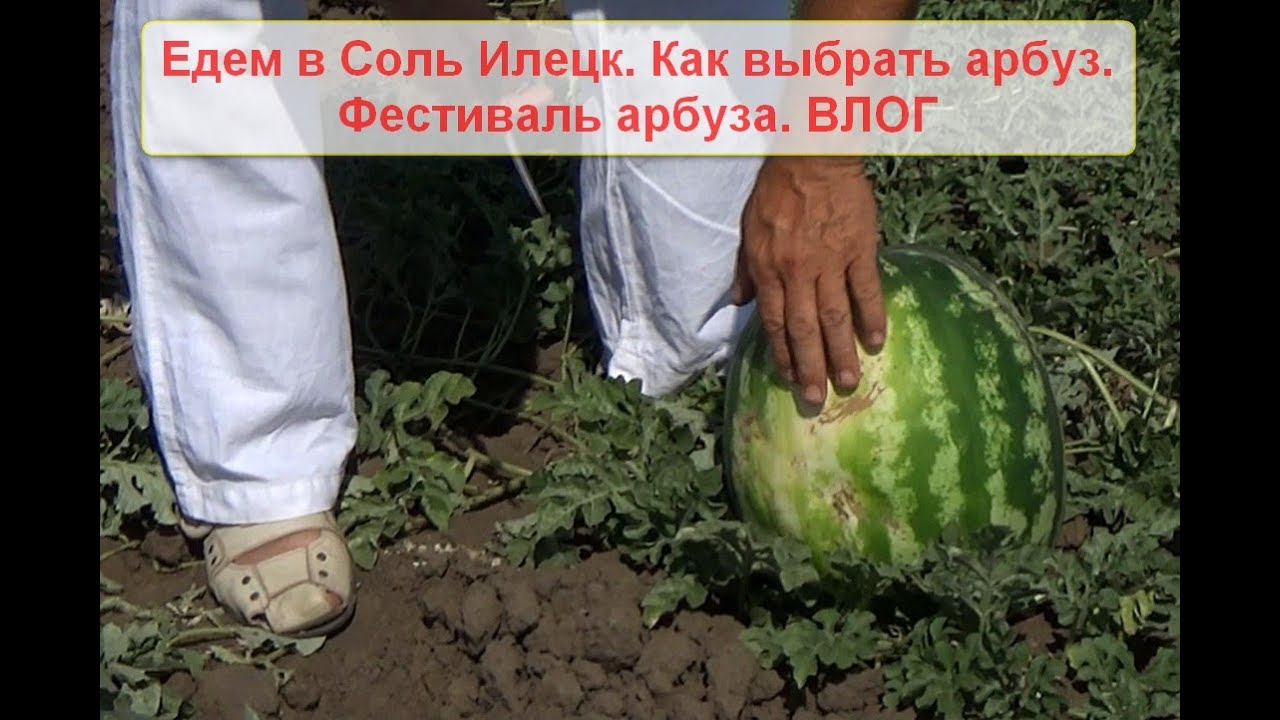 Едем в Соль Илецк. Как выбрать арбуз. Фестиваль арбуза ...