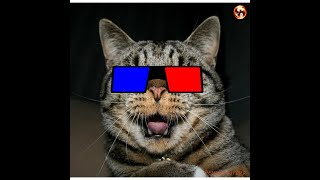 Смешные видео с котами собаками смешное Я РЖАЛ ПОЛЧАСА ПРИКОЛЫ С КОТАМИ И ДРУГИМИ СМЕШНЫми
