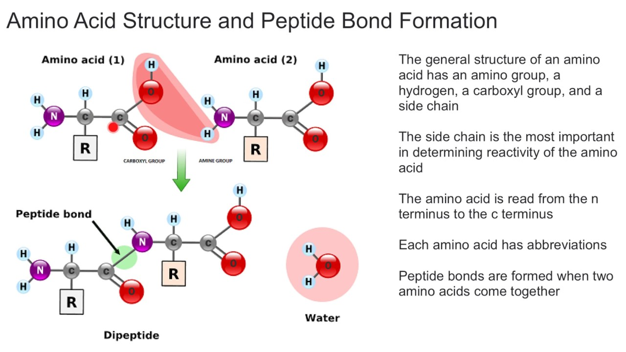 hight resolution of diagram amino acid