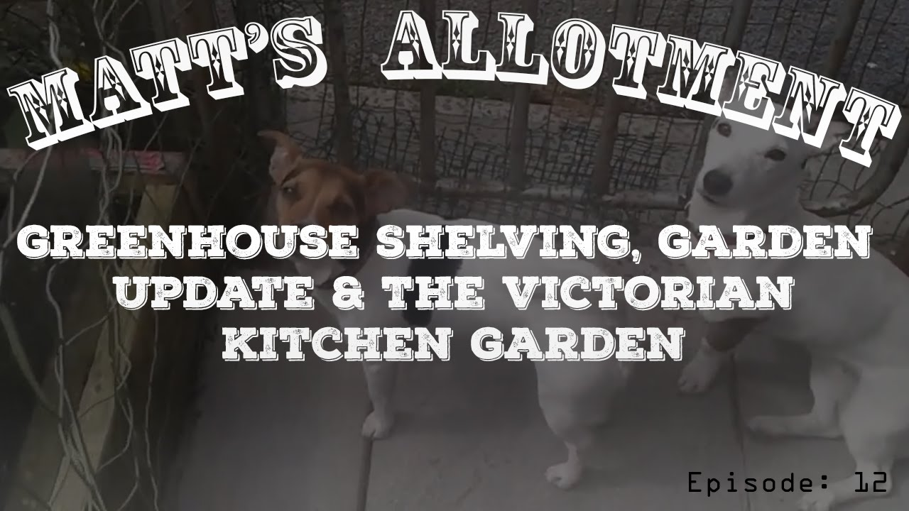 The Victorian Kitchen Garden Matts Allotment Ep12 Greenhouse Shelving Garden Update The
