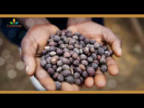 CAISTAB soutien les Panthères du Gabon en association sa marque de café ALANGA.