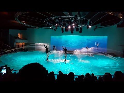 Dolphin Show In 4K - Dolphinarium (Lithuania, Klaipėda, Smiltynė) | HD