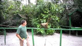 アマゾン マカコ(猿)の森。 野生のサルの餌付けに成功。原住民である...