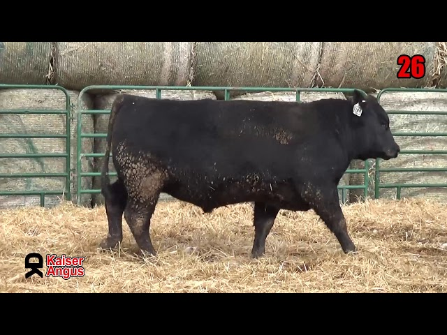 Kaiser Angus Ranch Lot 26