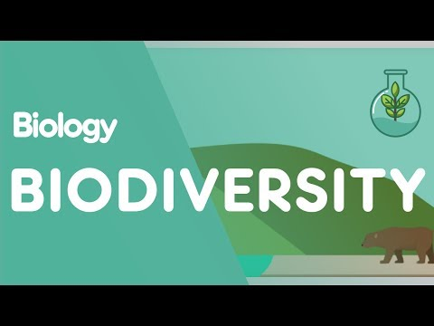 What Is Biodiversity? | Ecology & Environment | Biology | FuseSchool