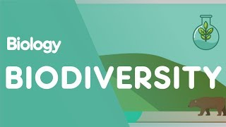 What Is Biodiversity? | Biology for All | FuseSchool